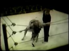 Collector's Classics 1 - 1950's Girls Wrestling (Silent) Clip 3 00:53:20